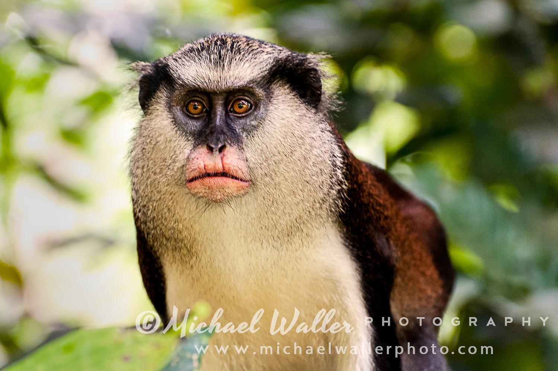 Mona_Monkey-1_WebLo